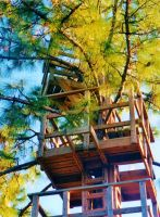 Our Treehouse Built by My Husband {Photo 19} by Empress-XZarrethTKon