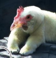 Policken by HumanDescent