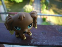 Spaniel on Balcony by AgraelLPS