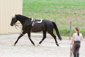 Black Horse Lunge Training by LuDa-Stock