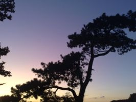 Tree silhouette by Cazamelia