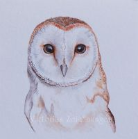 Barn owl in watercolor by LittleMissRaven