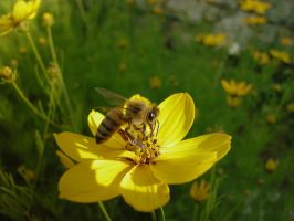Busy as a Bee. by Silvannia