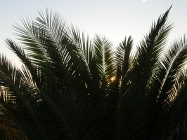 Spain Sa2 Sunrise palm by Gwathiell