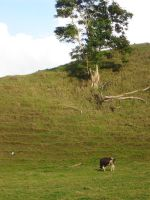 Cow and tree by GlobeyM7