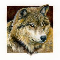 Timber Wolf by Heliocyan