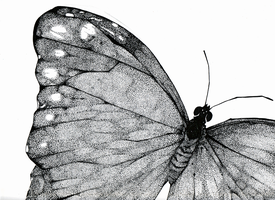 Stippled Butterfly by attorneyhoboninja