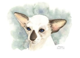 Siamese by saraquarelle