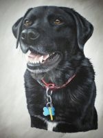 Abbie by petportraitman