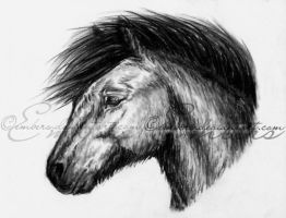 Charcoal Pony by Embers