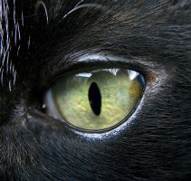 Cateye2 by NickiStock