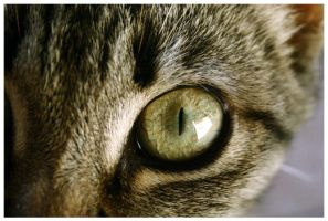 Cat Eye.. by Kalven