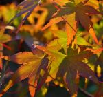 indian summer by jynto