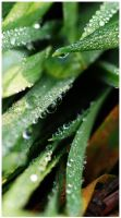 clear drops by FMpicturs