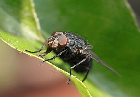 fly close-up by marob0501