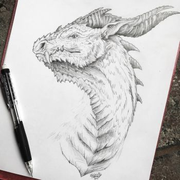 Dragon Sketch! by Frostwhisker1