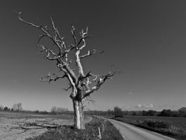 Another Dead Oak by Xs9nake