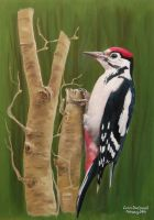 A Greater Spotted Woodpecker (Male) by huckerback6