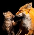 Mother and Kit by Les-Piccolo