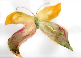 Schmetterling I by airbirth