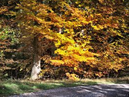 Automn Forest by Escara40