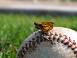 Butterfly Baseball by Chinchilla-Man
