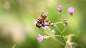 Bee by samantha4