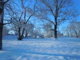 A Snowy Tundra In Central Park by Brooklyn47