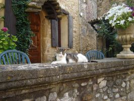 French Cat by panna-cotta