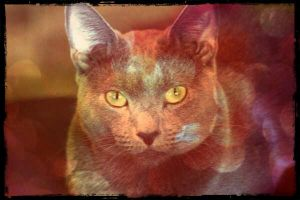 Russian Blue by axiom463