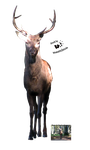 Cut-out stock PNG 65 - majestic stag by Momotte2stocks