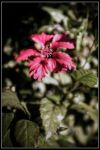 Flor01 by avaladez