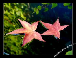 two mapleleafs on the water by albatros1