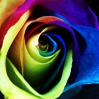 Rainbow Rose by tastybedsore
