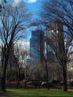 Buildings from Central Park by goodbyeLOVE