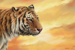 Tiger - portrait by Bisanti