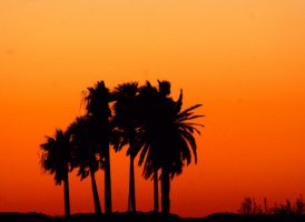 palm tree silhouette by TlCphotography730