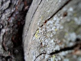 Oldness of the Tree by Drakeshya