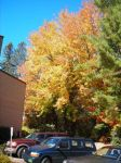 Crisp Leaves of Fall over Cars by Apollo360