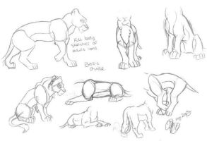 Guide2drawing TLK lion bodies by ArtistMaz