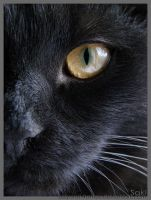 Your Soft Smooth Black Fur by beyond-frames