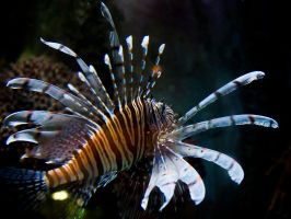 Lionfish Butterfly by InayatShah