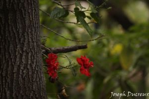 Red Flower by Jos-Duc