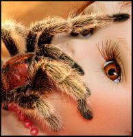 GlamOur sPider by shaWa5i