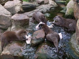 Blijdorp - Otters by Saabii