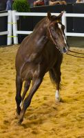 STOCK - 2014 Total Equine Expo-88 by fillyrox
