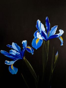 Irises by Li-Soro