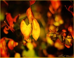 Last fall by ShlomitMessica