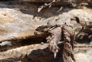 TREE BARK STOCK 2 by Theshelfs