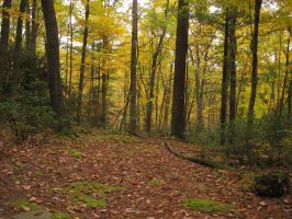 Fall Forest 3 by Salamander-Stock
